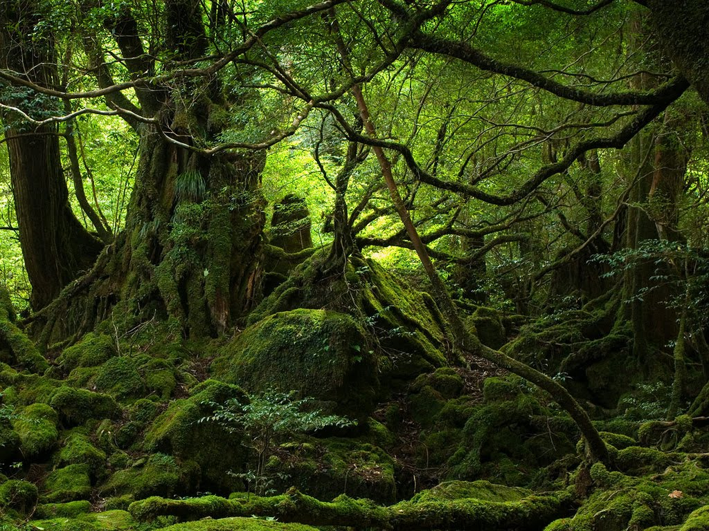 Ewallpics: 30 Amazing Forest Wallpapers 1024x768
