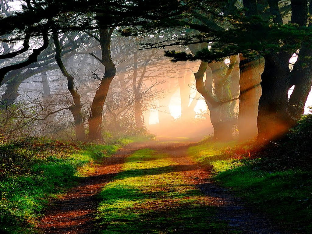 Cars For Kids >> Ewallpics: 30 Amazing Forest Wallpapers 1024x768