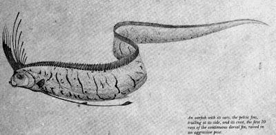 (ไขปริศนาปลาพญานาค