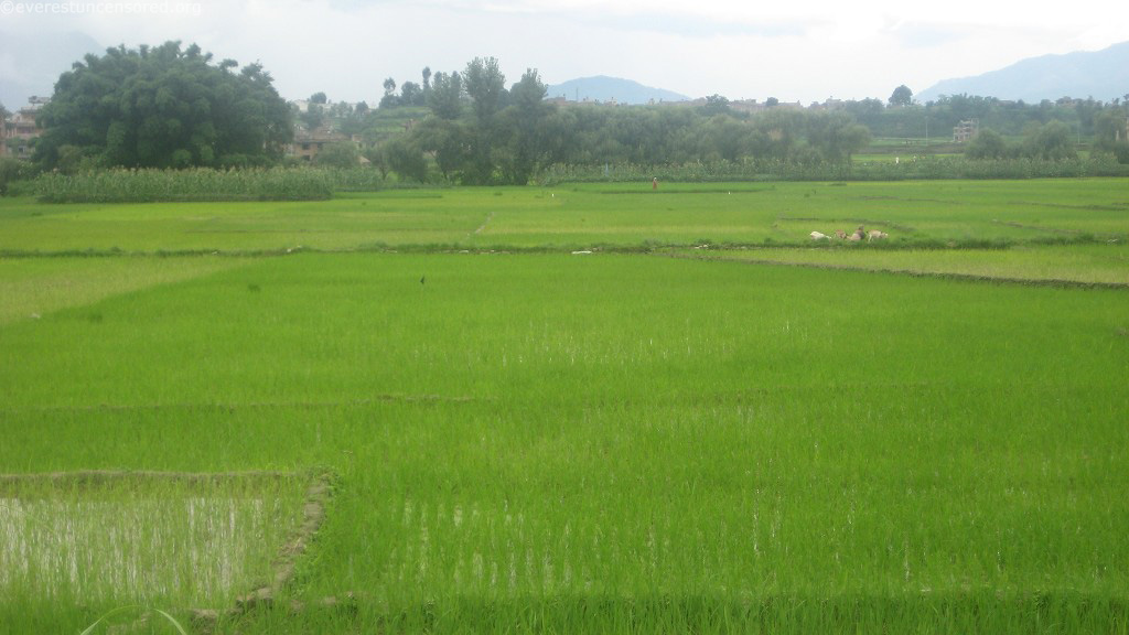 Nepal and Nepalies Culture: Agriculture as a Main Occupation