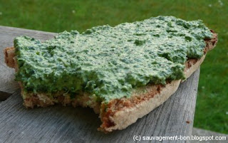 Tartine verte au chénopode blanc et à l'ail des vignes