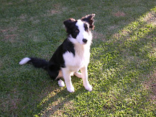 Chinzi at 5 months