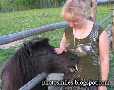 голодная лошадка пони