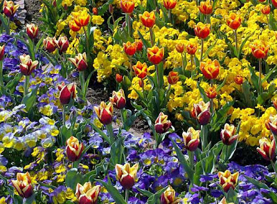 сочетание цветов дизайн, фото цветов, композиция цветов