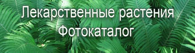 ЛЕКАРСТВЕННЫЕ РАСТЕНИЯ  ФОТОКАТАЛОГ