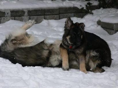 Me & Kola