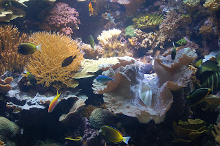 In the Coral Reef exhibit