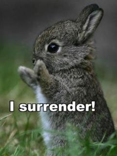 [I_Surrender.jpg]