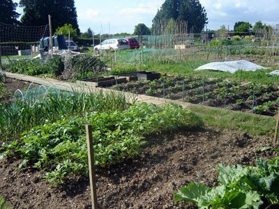Our neighbours allotment.