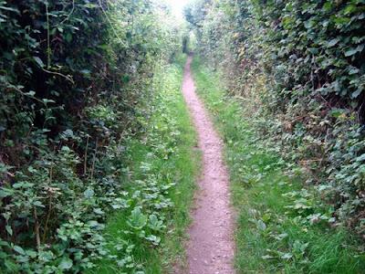 Lyme Regis To Seaton Undercliffs Walk