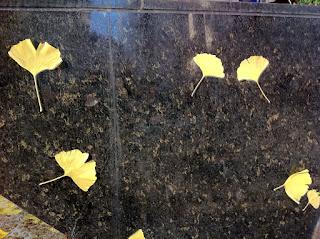 Ginkgo leaves in Tokyo