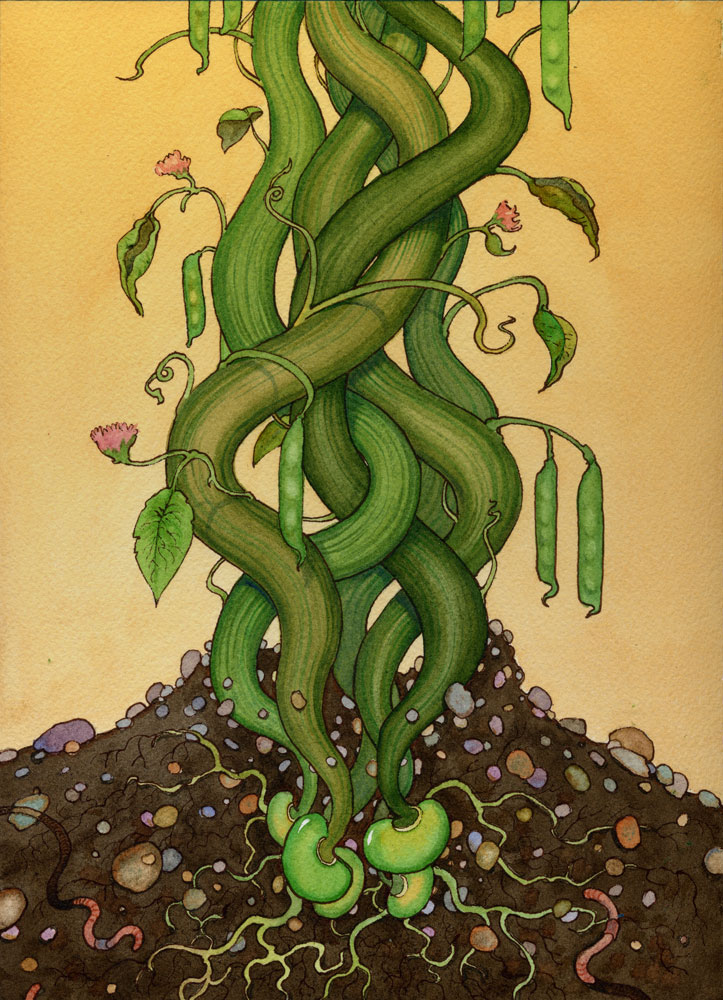 the bean stalk - photo #15