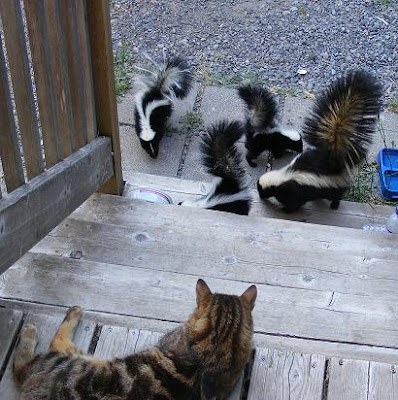 Cat and skunks