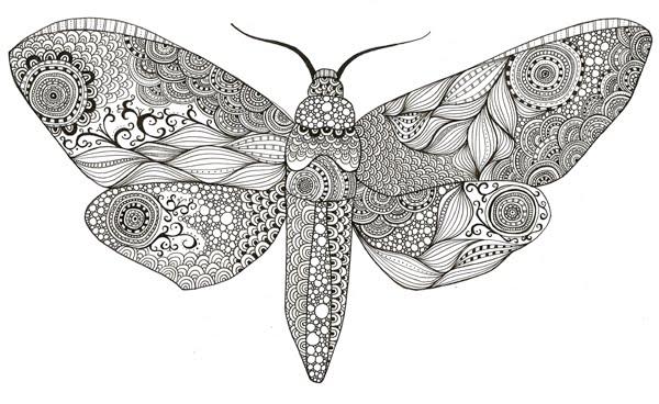 Moth drawing - photo#48