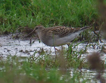 Pec Sand, Low Newton, September 2007