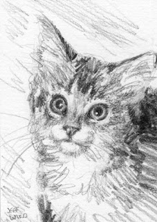 kitten pencil sketch aceo