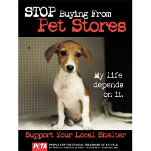 PETA DOG POSTER STOP BUYING FROM PET STORES