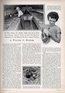 POPULAR SCIENCE MAGAZINE FEB 1936 ARTICLE LIVING RAT TRAPS PAGE 2