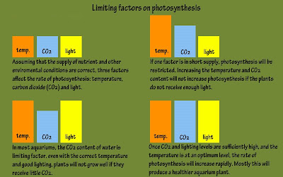 three factors that affect the rate of photosynthesis The following graph shows how different concentrations affect the rate of photosynthesis study of photosynthesis and the factors affecting it.