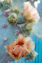 Prickly Pear in garden