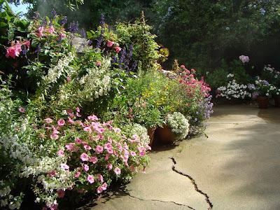 Patiogarden on Patio Garden Summer 2008