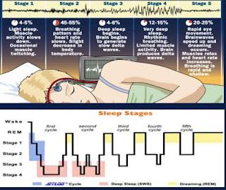 مراحل النوم الخمس، بينهم مرحلة حركة العين السريعة التي ترتبط بمشاهدة الأحلام