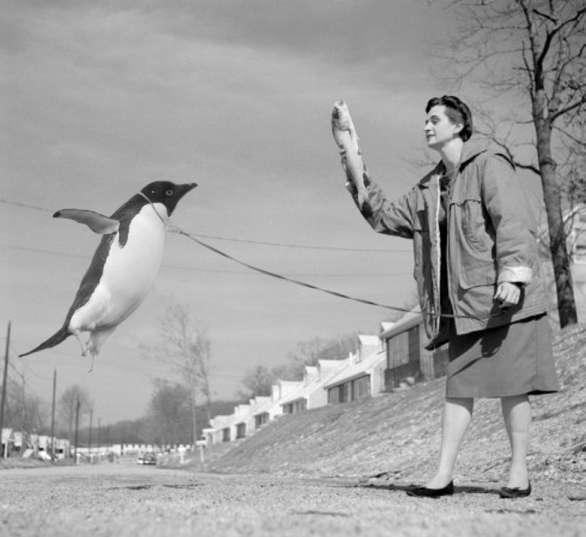 [penguin_treat.jpg]