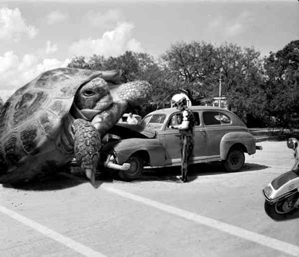 [turtle_ticket.jpg]