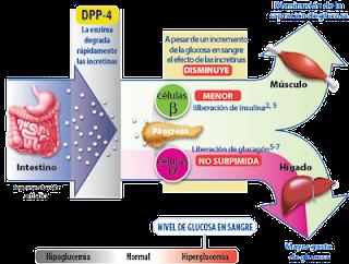 Encuesta Qué tan ganas de Metabolismo basale