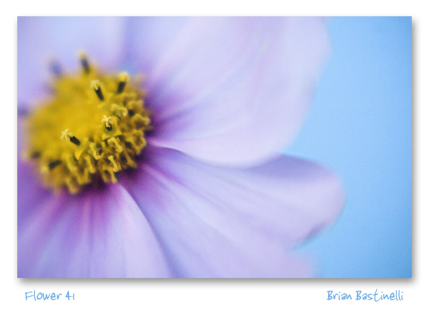 [Flower_41_sm.jpg]