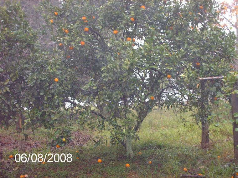 Muitas frutíferas na chácara