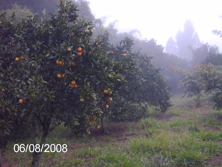 Na chácara existem mais de duzentos frutíferas, todas produzindo...