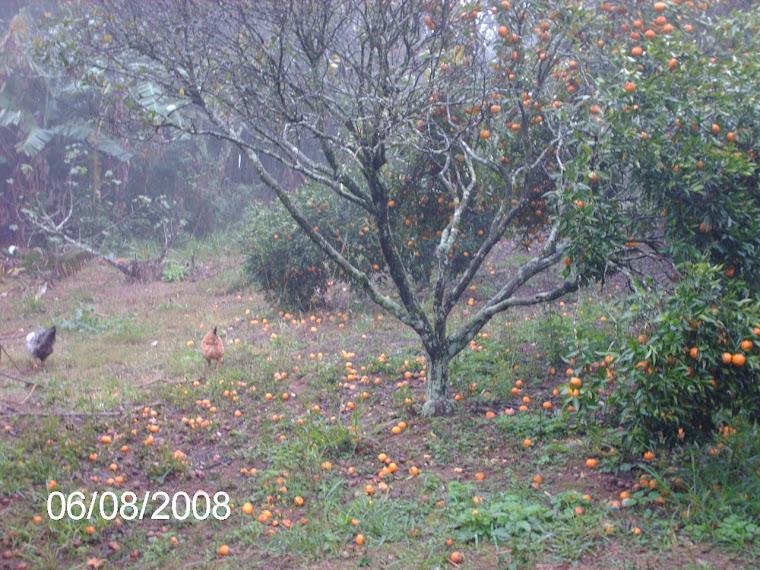 Veja como esta o chão de bergamotas.