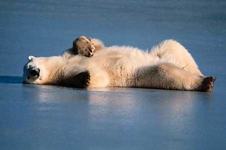 [polar-bear.jpg]