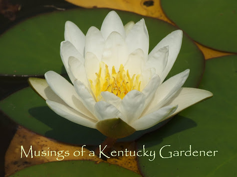 Musings of a Kentucky Gardener