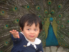 Cecelia and the beautiful peacock