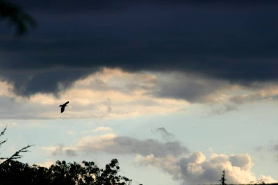 bird and dark clouds