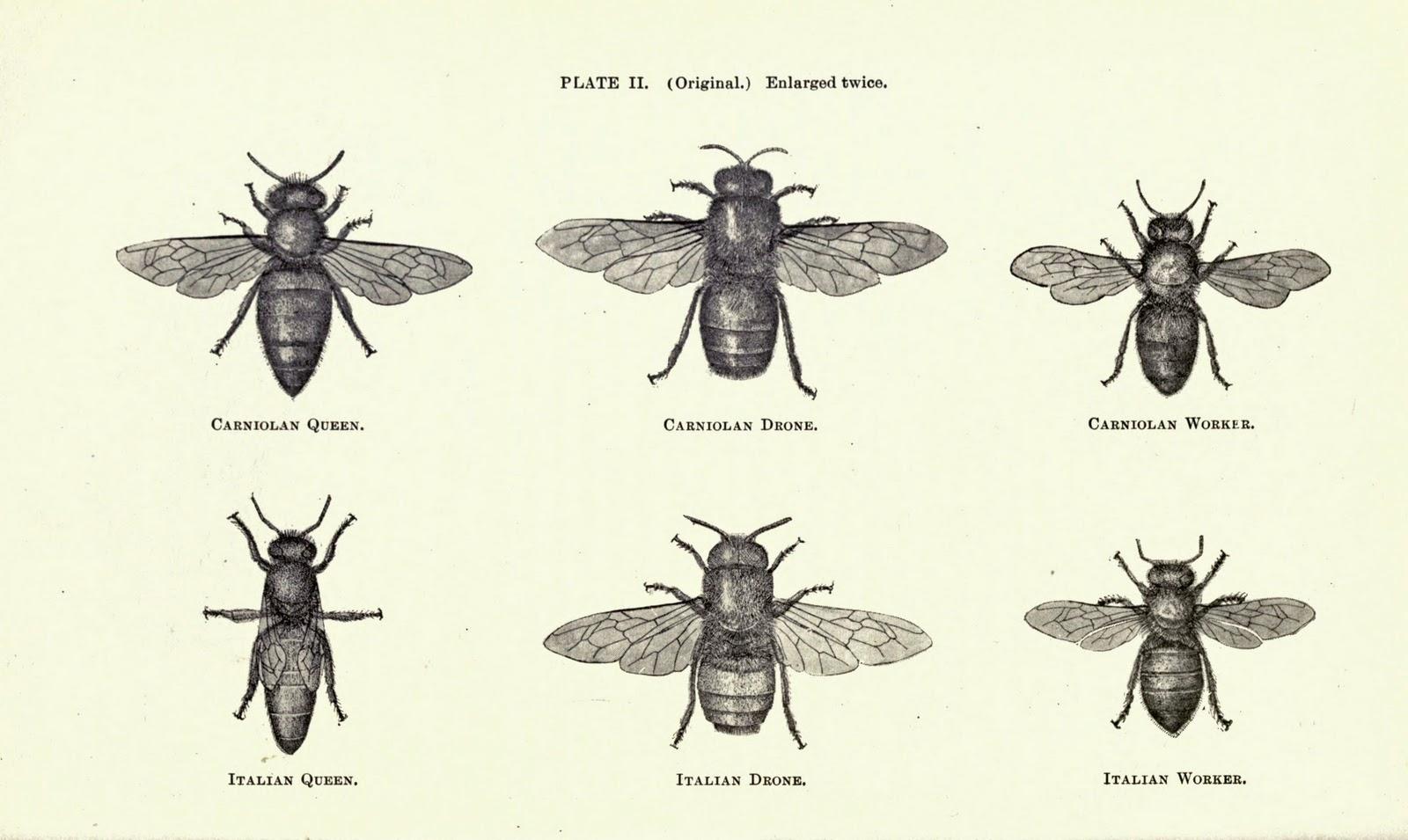 Vintage Ephemera Illustration Bees