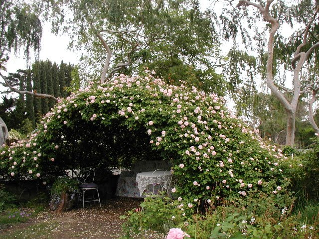 Charming rose cave.