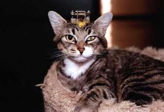Gato adulto el laboratorio; los electrodos y tubos están insertados en su cráneo de forma permanente.