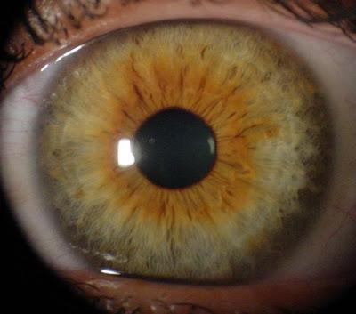 Anatomía del ojo y sus anexos