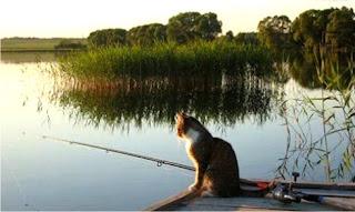 Рибалка, для нас це не просто вилов риби з водойми заради втамування голоду :) , це скоріше моральний відпочинок, відновлення нервової системи та й взагалі прекрасне проводження часу на природі. Це можливість побути одному зі своїми думками, і забути про все буденне, яке раніше нас турбувало. Рибалка це ще й вид спорту. Її можна поділити на любительську (якою займається основна чатина рибаків) та професійну (в більшості випадків оплачувана). А ще риболовля не далеко стоїть від туризму.