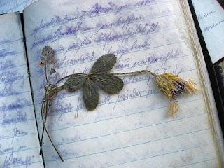 LSAT Diary Blog