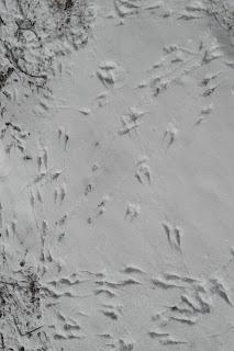 The Five of Us: Nature Study/ Animal Tracks