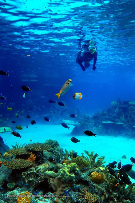 Underwater photography,Australia