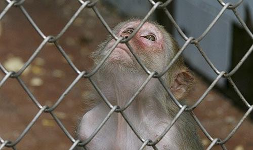 e82215003 FREEKY BUSINESS: The Monkey Story
