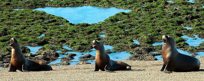 Valdes Peninsula Sea Lion in Patagonia