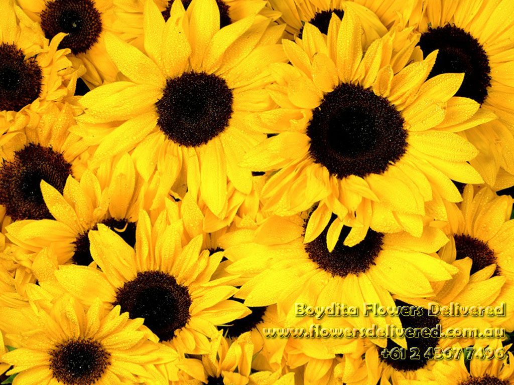Fall Desktop Wallpaper With Sunflowers S W A Y Sunflowers Heaven The Happilionaire Lifestyle