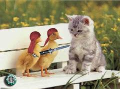 بحب القطط