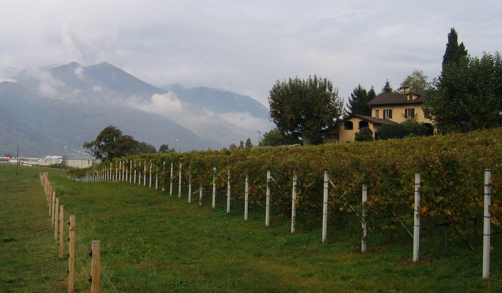 [vineyard.jpg]